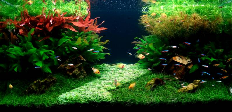 bubbles aquarium - aquascapes