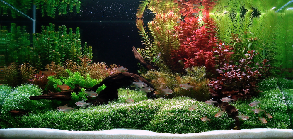 Index of /images/Aquascape Test Page/front page/13062007files/Design 7 ...