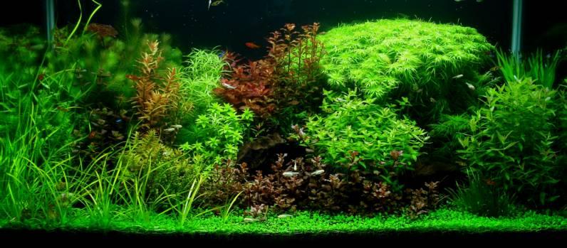 Aquascape Design bubbles aquarium - aquascapes