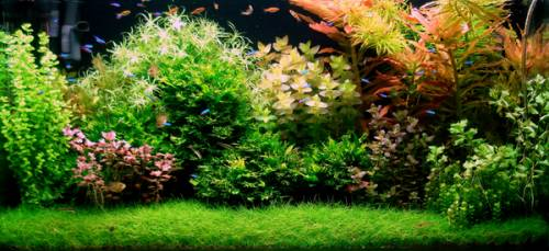 Bubbles Aquarium Aquascapes