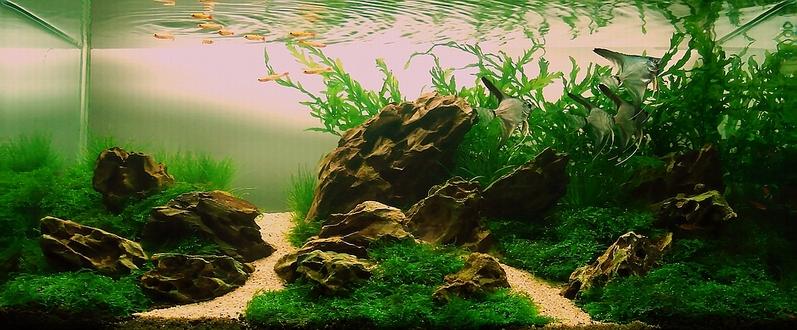 Bubbles Aquarium Aquascapes Nature Designs 2008