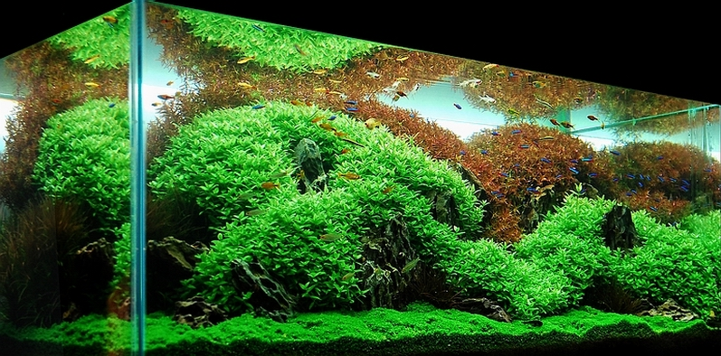 Index of /images/Aquascape/Gallery_2009/HKCC