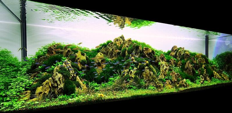 Bubbles Aquarium - Aquascapes (2009 Aquascaping Gallery)