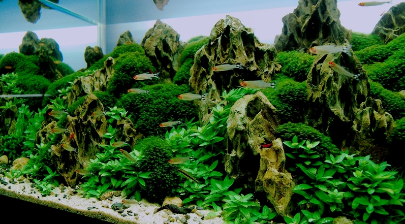Index of /images/Aquascape/Gallery_2009/The_Forbidden_Realm