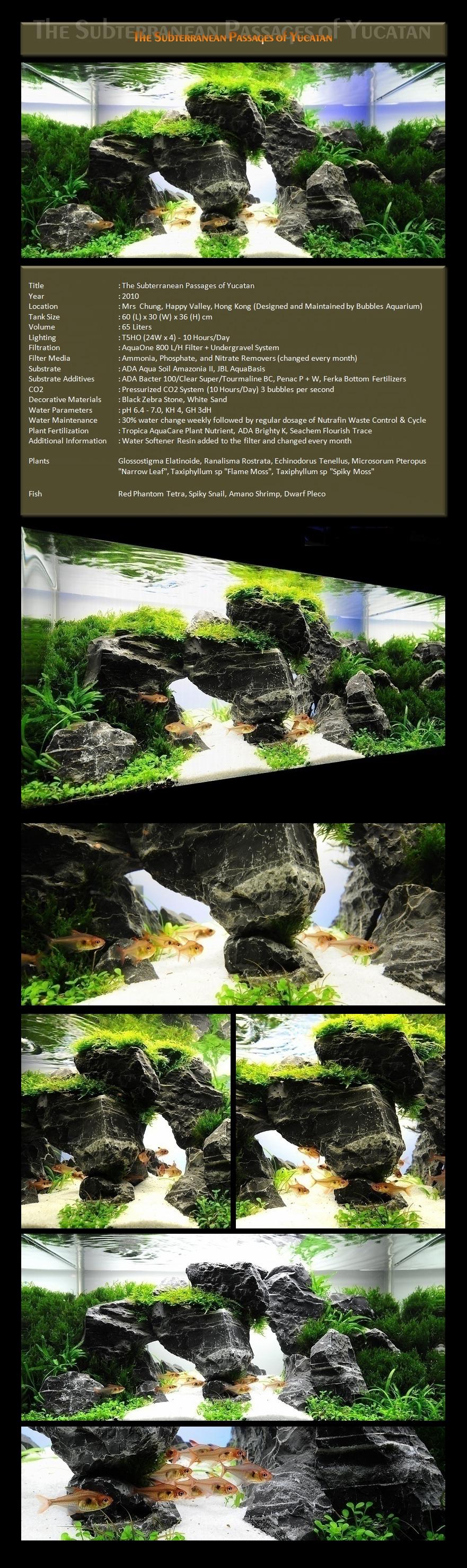 Bubbles Aquarium Aquascapes 2009 Aquascaping Gallery